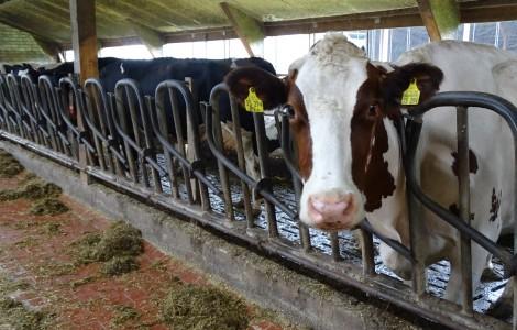 Gesunkene Milchpreise bedrohen Hiller Landwirte