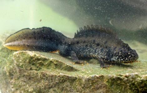 Gefährdete Tierarten im Kreis Minden-Lübbecke