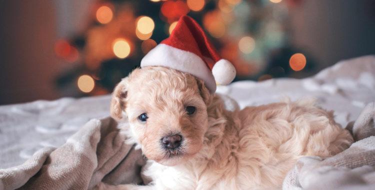 Keine Tiere als Weihnachtsgeschenke